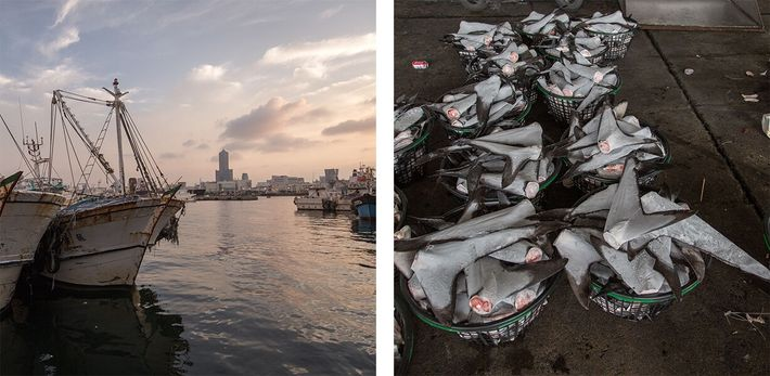 embarcações pesqueiras e cestos com barbatanas de tubarão