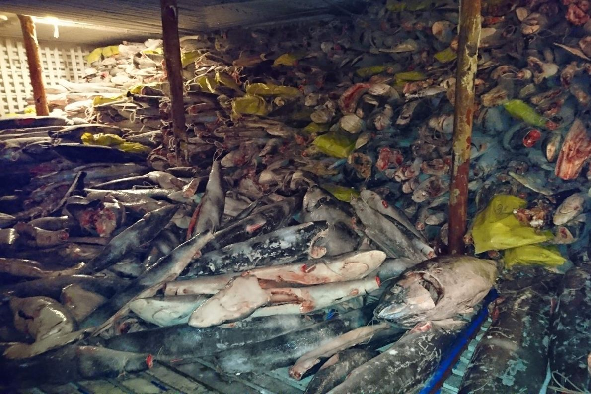 It is illegal to catch or transfer sharks through the reserve. The ship was confiscated and ...