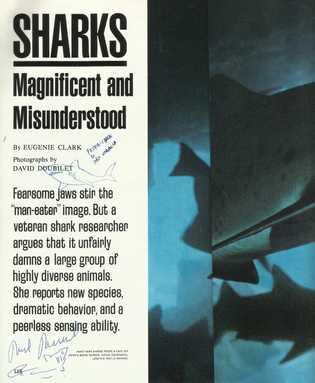 Artigo de Eugenie Clark publicado na revista National Geographic em 1981.