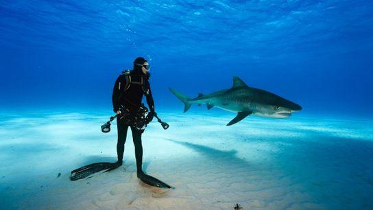Fotografia de Vincent Canabel ao lado de um tubarão
