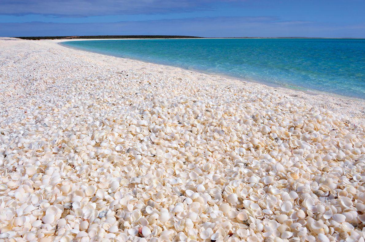 Praia das Conchas, Baía dos Tubarões, Austrália Ocidental.