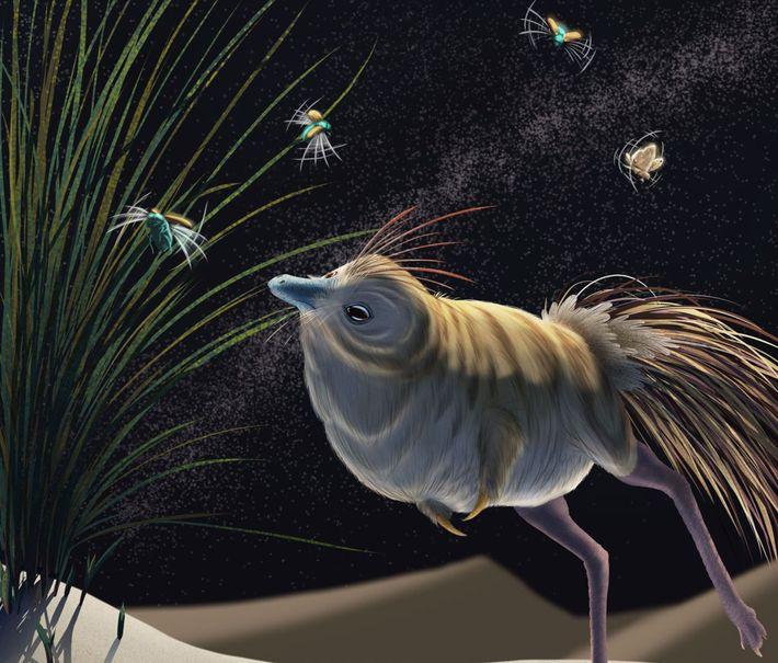 Um dinossauro do género Shuvuuia, que viveu durante o período Cretáceo onde atualmente fica a Mongólia, ...