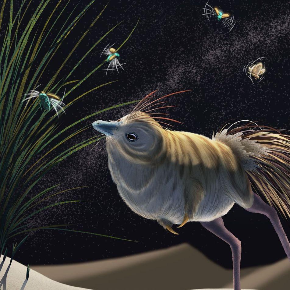 Crânios de dinossauros revelam pistas sobre voo – e comunicação