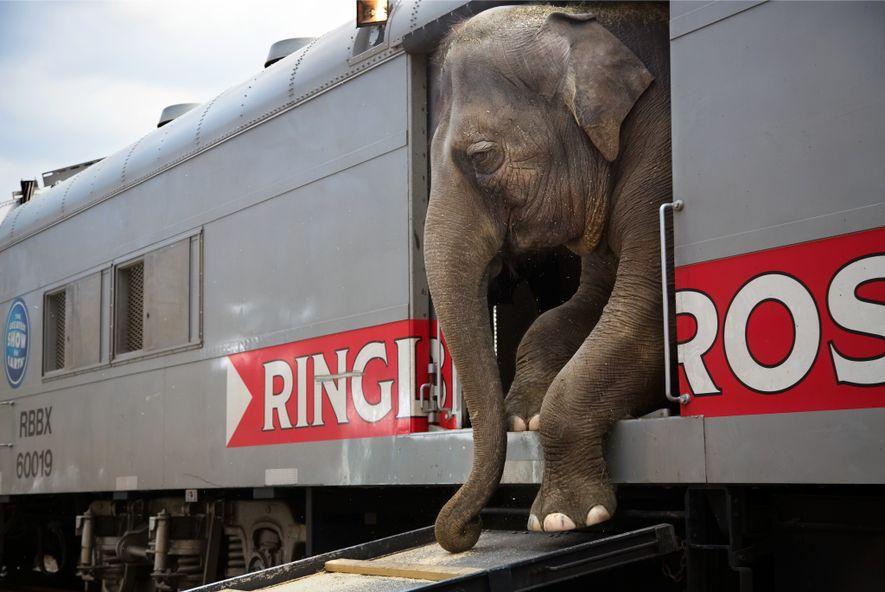 Proteção dos animais e fim dos circos