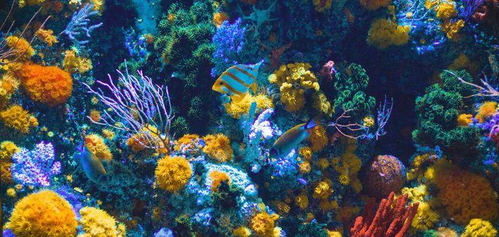 Estima-se que 75% dos recifes de corais se encontram ameaçados pela atividade humana