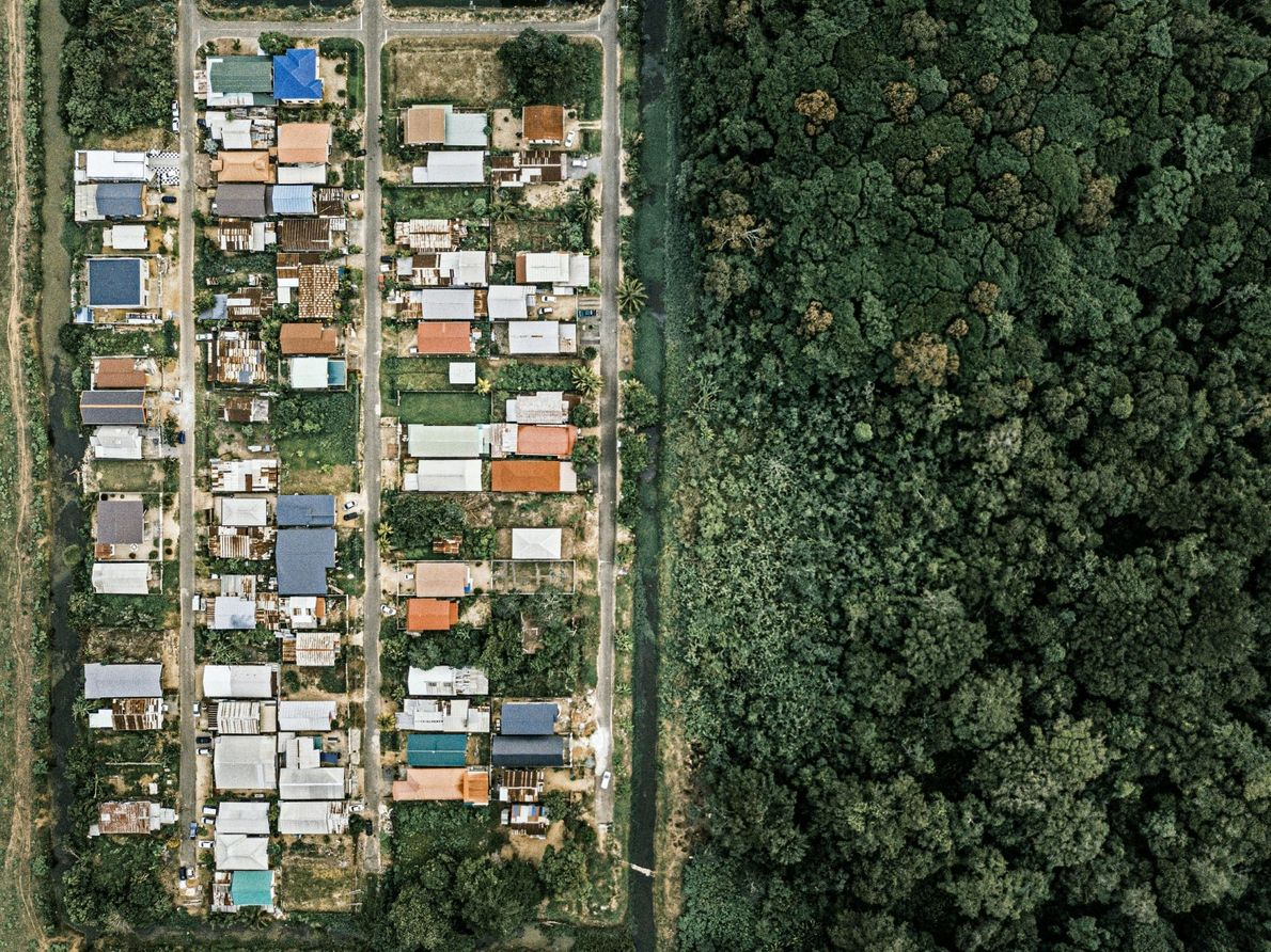 O Suriname é o país mais florestado do mundo, mas à medida que a capital, Paramaribo, ...