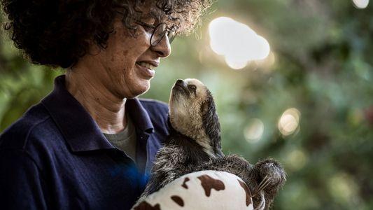 A Senhora que Salva Preguiças no Suriname