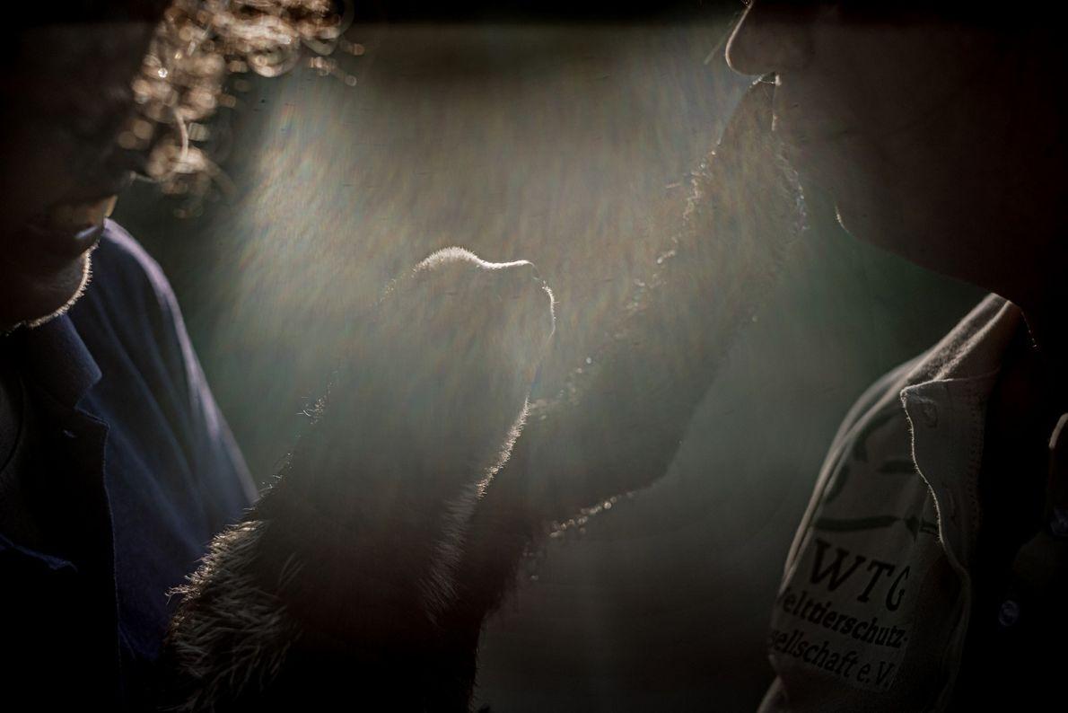 """Quando lhe perguntam sobre o futuro das preguiças no Suriname, Monique Pool explica """"estou preocupada com ..."""