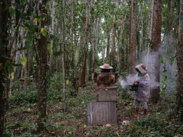apicultores-congo