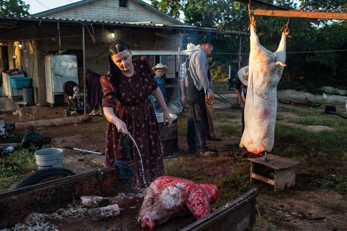 No México, Ana Ham limpa a cabeça de um porco no Acampamento Temporal Menonista. Esta família ...