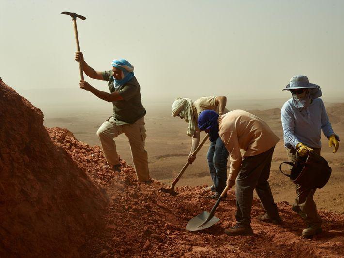 Membros da equipa escavam com pás e picaretas o sítio arqueológico de Zrigat, em Marrocos, onde ...