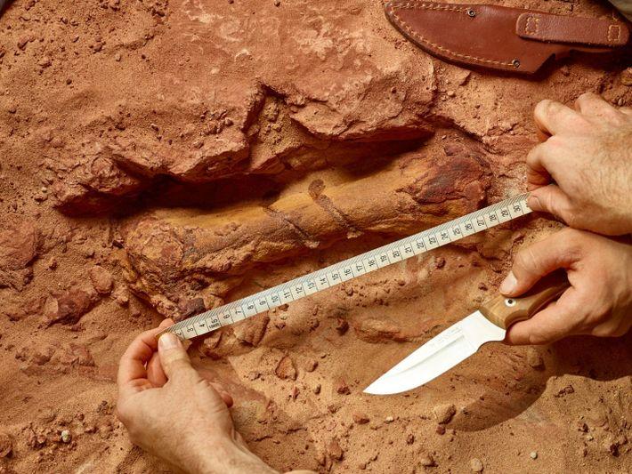 Um osso da pata do espinossauro, ainda presa no arenito vermelho, no sítio de escavação em ...
