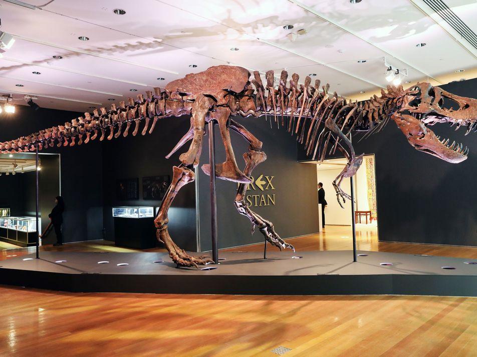 O T. Rex 'Stan' Foi Vendido por 31.8 Milhões de Dólares – e os Cientistas Estão ...