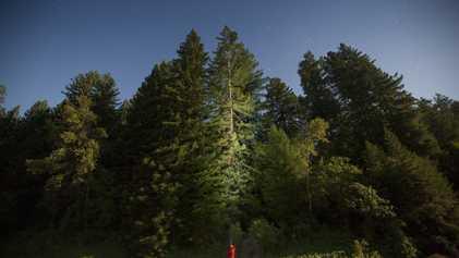 Veja Fotografias Majestosas das Maiores Árvores na Terra