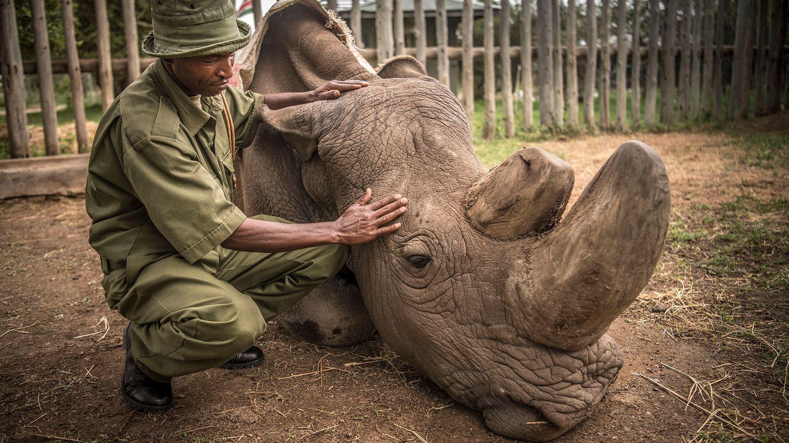 sudan rinoceronte morte