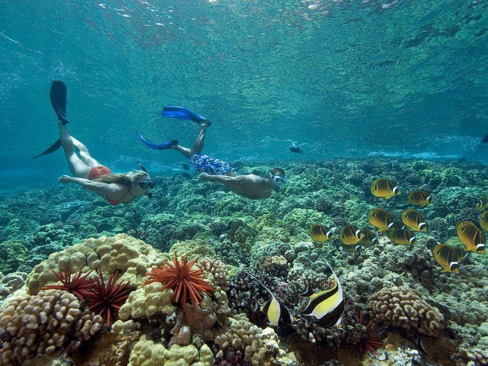 Descubra as Alternativas ao Protetor Solar com Efeitos Nocivos nos Recifes de Coral