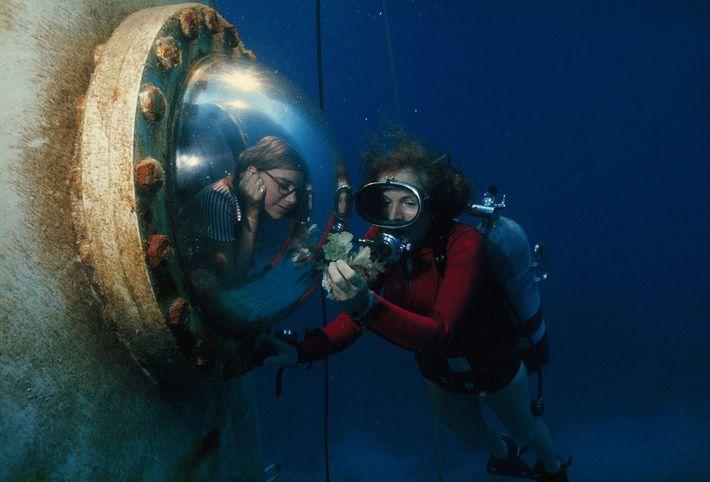 Earle mostra uma alga a uma visitante.