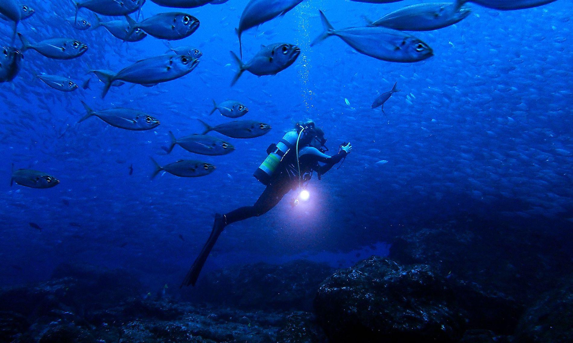 A bióloga marinha Jessica Cramp explora as águas das Ilhas Galápagos.