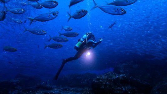 Reencontro de Duas Gerações de Líderes, Defensoras do Oceano