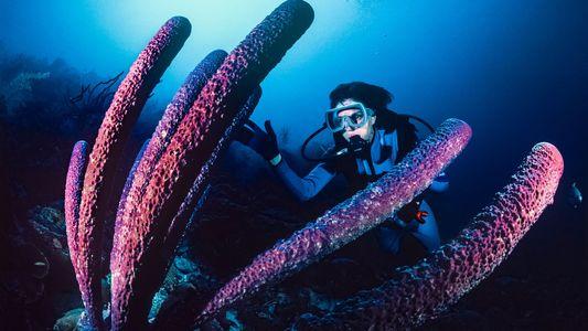 Sylvia Earle, a Rainha dos Oceanos