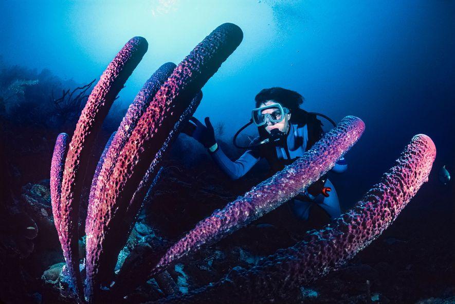 Earle observa uma esponja tubular gigante nas águas de Bonaire.