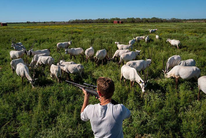 Michael Rann, gestor de criação do 777 Ranch, um enorme estabelecimento de caça perto de Hondo, ...
