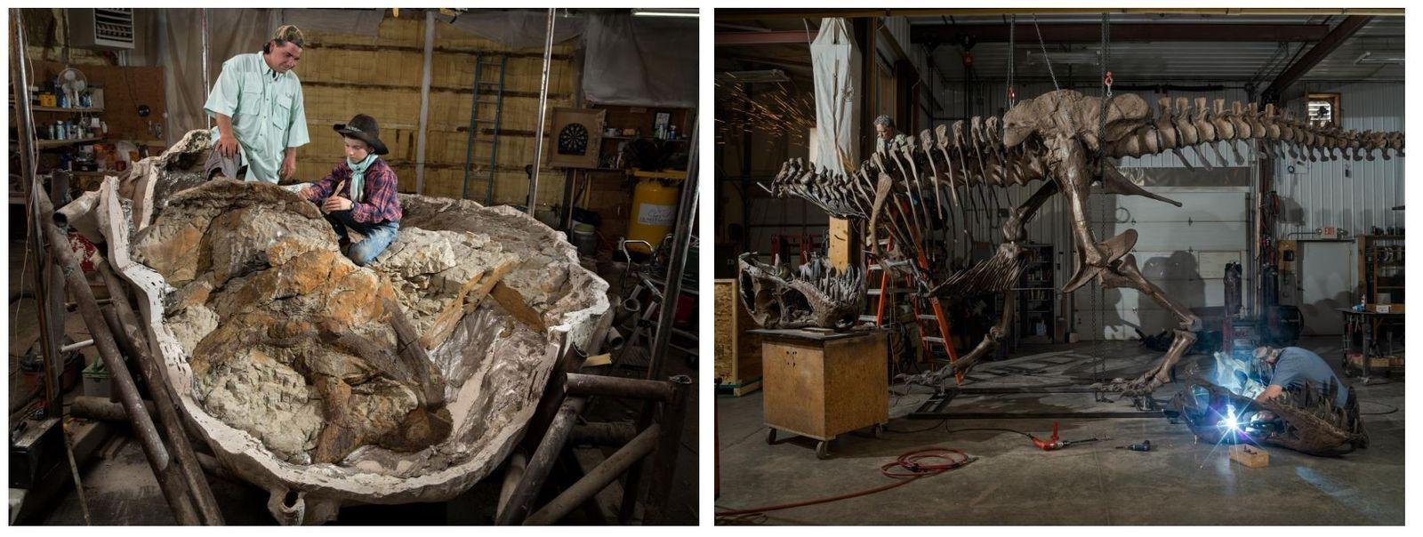 Esquerda: Luke Phipps, de 11 anos, está em cima de um fóssil de Triceratops, com Chris ...
