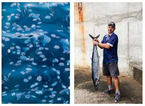 Esquerda: Peixes a nadar nas águas do porto de Jamestown, em Santa Helena. Direita: O pescador Keith ...