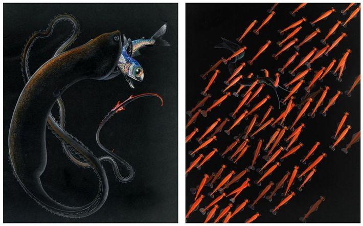 Else Bostelmann dava vida às criaturas desconhecidas do fundo do mar com os seus desenhos. À ...