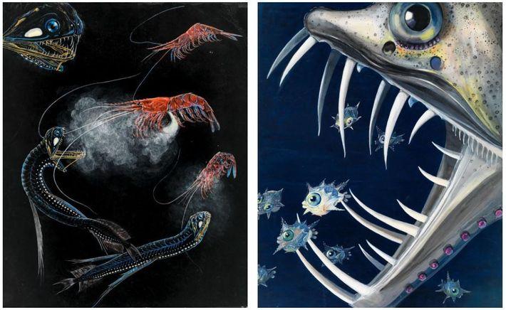 Esquerda: Camarões e peixes a nadarem nas profundezas do Atlântico. Direita: Um peixe do género 'Chauliodus' a ...