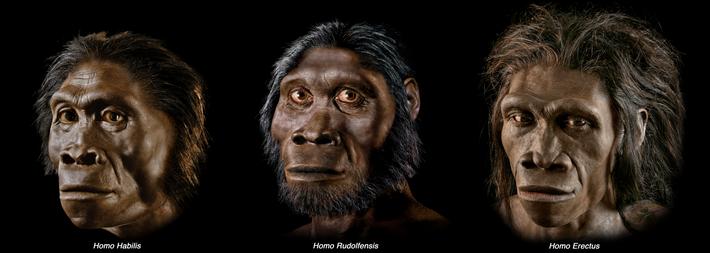 Um trio de outras espécies de Homo, todas elas aparecendo pela primeira vez nos registos de ...