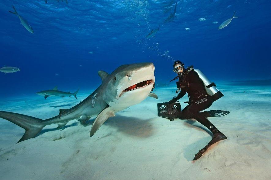 Veja Alguns Mergulhos de Brian Skerry com Tubarões