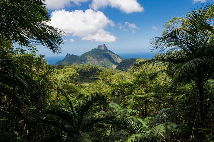 A maior floresta urbana do mundo, a Floresta da Tijuca