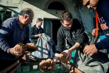 Comércio de esponjas do mar