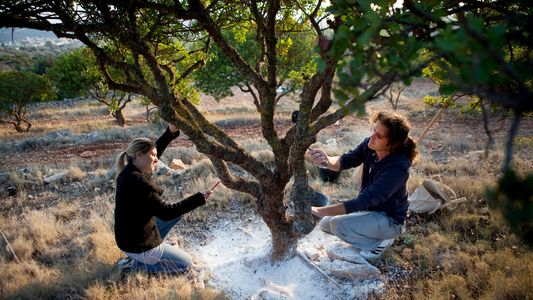 Planta Curativa Cresce Apenas Numa Ilha Grega
