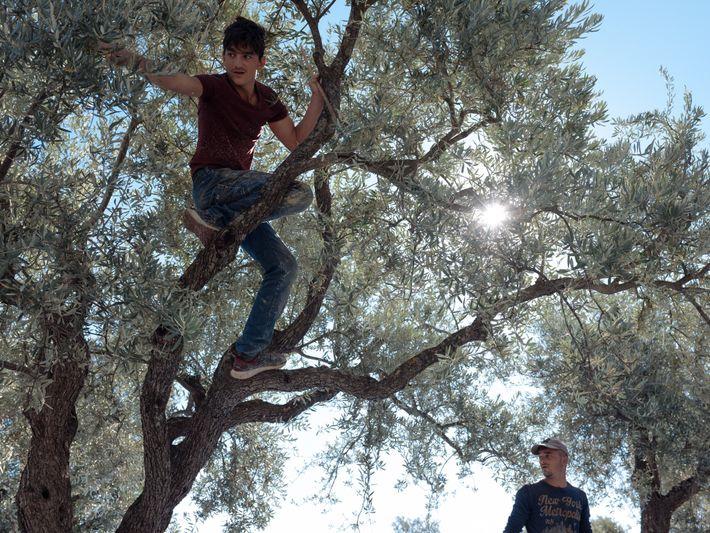 Ahmed (à esquerda), com 17 anos, e o seu irmão Emin, de 22 anos, apanham azeitonas ...