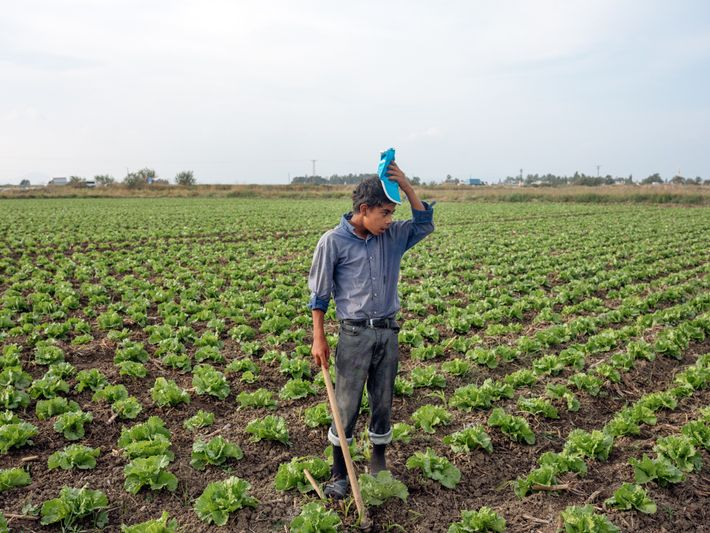 Malik, 13 anos, trabalhou nestes campos, na cidade costeira turca de Mersin, desde que fugiu da ...