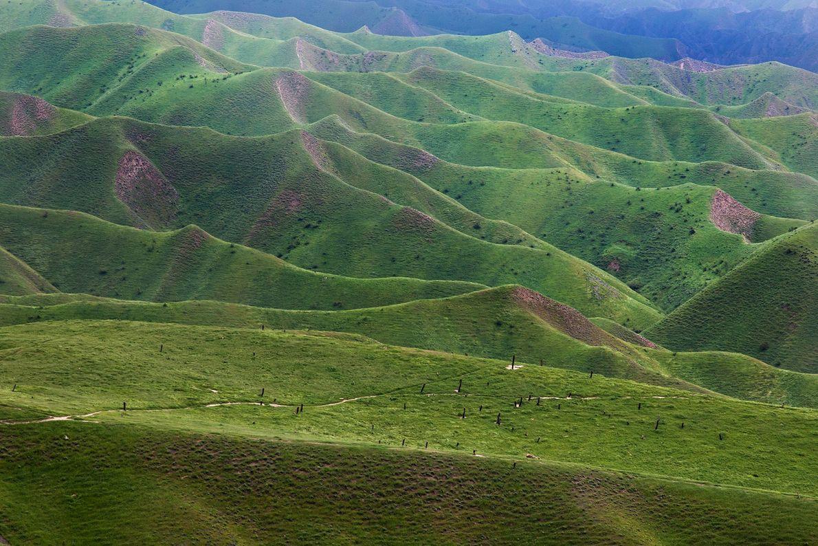 Colinas verdejantes