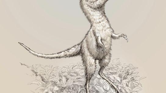 Esta ilustração mostra a aparência das crias de Tyrannosaurus rex. Os fósseis embrionários recém-descritos não pertenciam ...