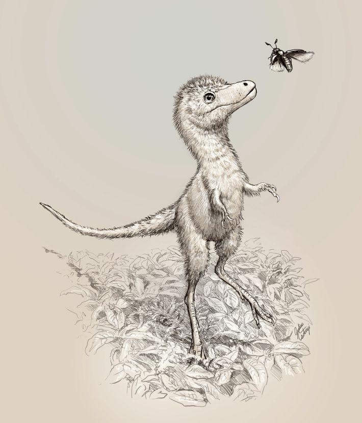 Esta ilustração mostra a aparência das crias de Tyrannosaurus rex. Os fósseis embrionários descritos recentemente não ...