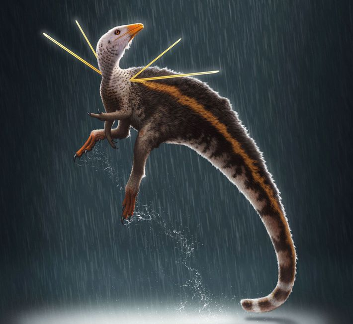 O dinossauro Ubirajara jubatus é o primeiro dinossauro não-aviário de que há conhecimento com penas nos ...
