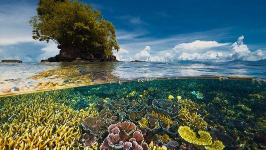 O Mundo Falhou Um Prazo Crítico Para Salvaguardar a Biodiversidade, Diz Relatório da ONU