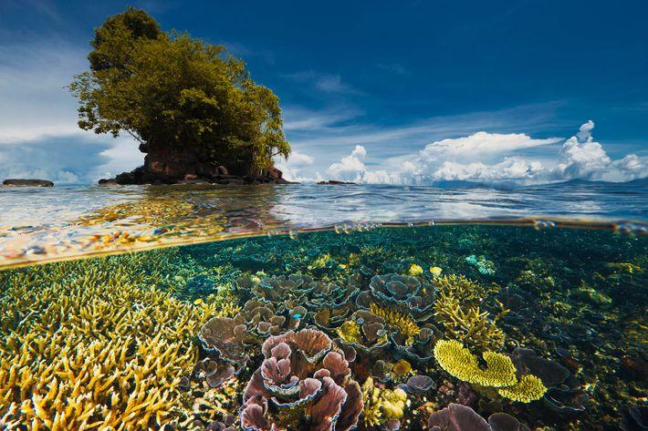 Uma península perto de Kimbe Bay, na Ilha da Nova Bretanha, em Papua Nova Guiné, protege ...