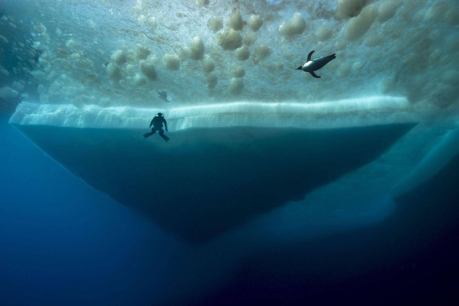 Imagens da Misteriosa Vida Marinha Sob a Antártida