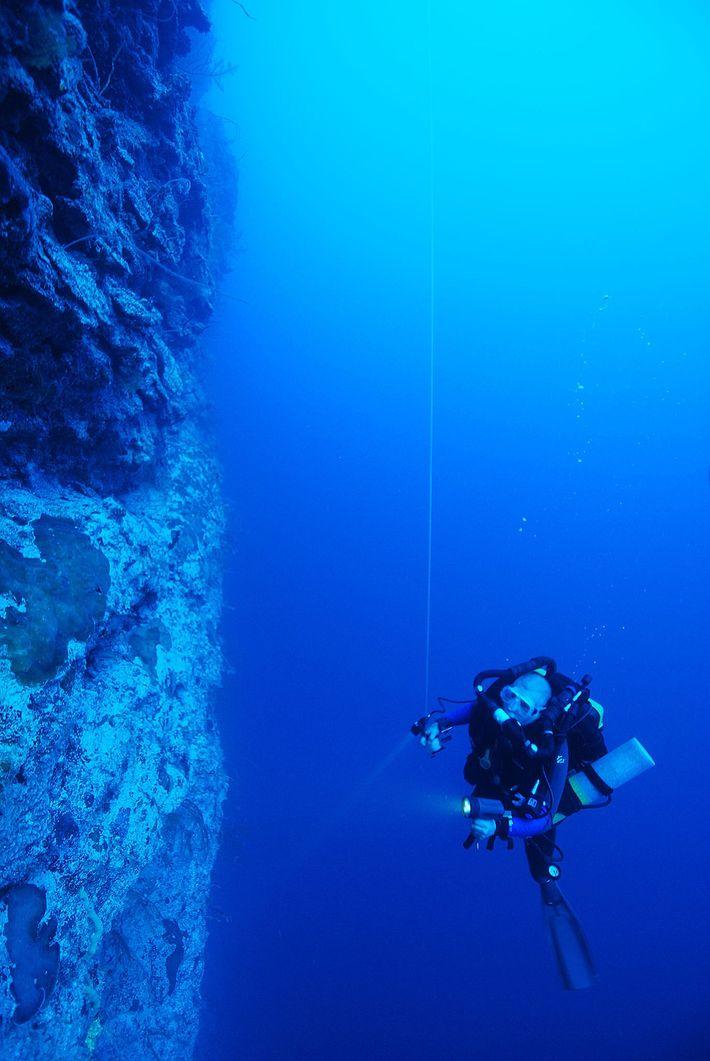 """Utilizando o Ocean Space Habitat, os mergulhadores podem mover a """"tenda"""" portátil e de baixo custo, ..."""