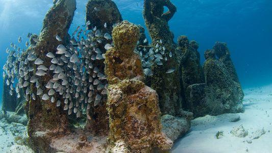 Mergulhe nas Profundezas do Primeiro Museu Subaquático dos Estados Unidos