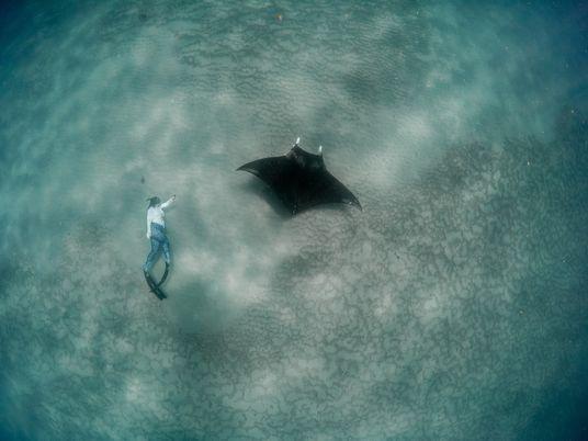 "Raias-manta Enormes Descobertas ""Debaixo do Nosso Nariz"" nas Praias da Flórida"