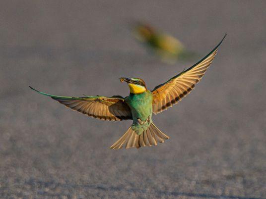 Estas fotografias documentam o encanto das pequenas aves da Serra da Arrábida