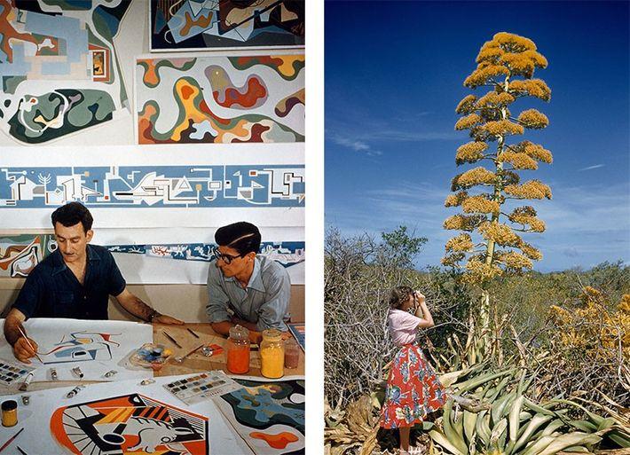 Esquerda: Arquitetos paisagistas trabalham no seu estúdio no Rio de Janeiro, no Brasil, em 1955. Direita: Uma ...