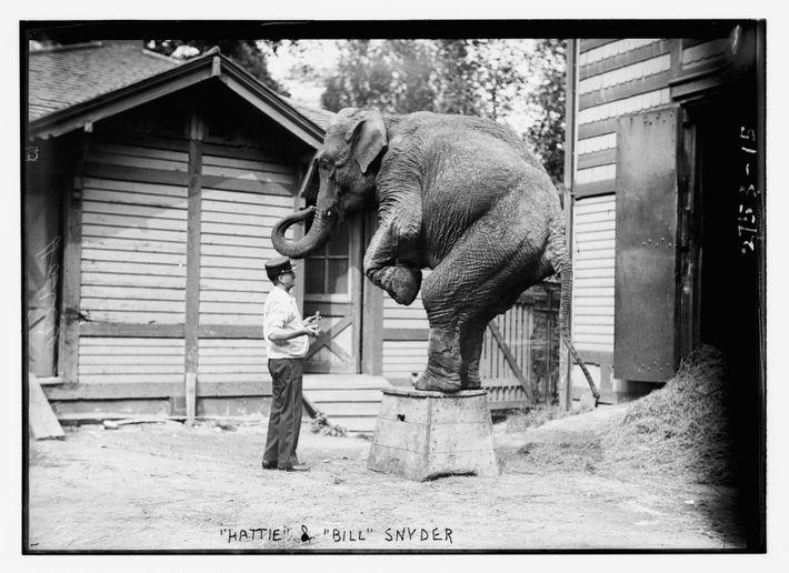 Em 1996, dias depois do seu último espetáculo no circo, Hattie morreu de tuberculose. Após a ...
